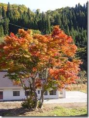 紅葉ドライブ 流葉