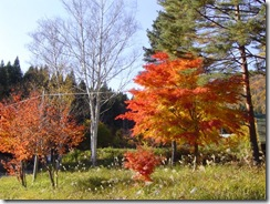紅葉ドライブ 流葉2